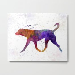 Transylvanian Hound in watercolor Metal Print