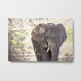 Elephant in the desert of Namibia | Travel photography Africa Metal Print