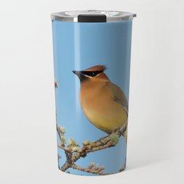 Cedar Waxwing Faces Sunset Travel Mug