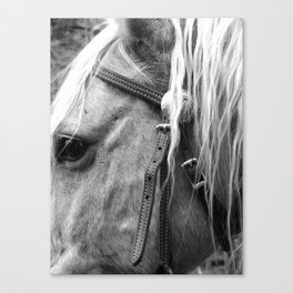 The Yellow Horse  Canvas Print