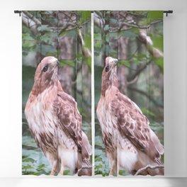 hawk Blackout Curtain