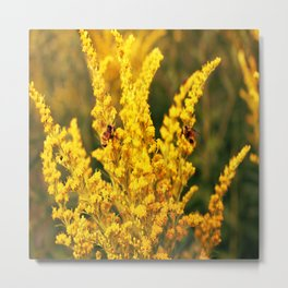 Bees on a Goldenrod Flower Metal Print