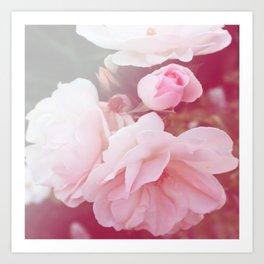 *Pinklight - Rose IV Art Print