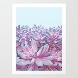 Sweet Succulents Art Print