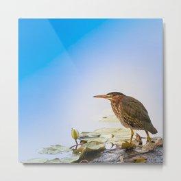 Crowned Night-Heron- Hammond pond Metal Print