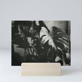 35mm Monstera Plant Mini Art Print