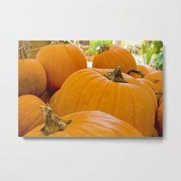 Pumpkin Patch Landscape Metal Print