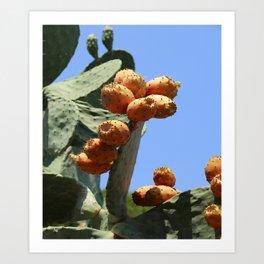 Cactus Pear Art Print