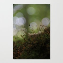 Abstract Nature I Canvas Print