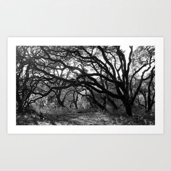 Oak Tree Tunnel Art Print