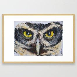 Intense Owl Eyes Framed Art Print
