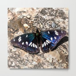 Southern White Admiral On Stone Butterfly Portrait Metal Print