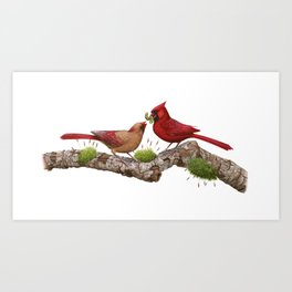 Northern  Cardinals Art Print