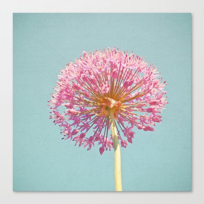 Pink Allium Canvas Print