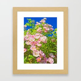 Sun Soaked Roses Framed Art Print