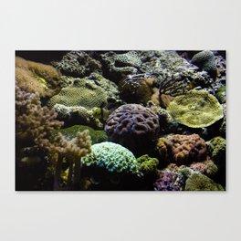 Sea Bed #3 Canvas Print