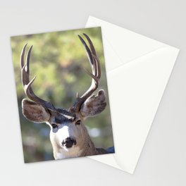 Watercolor Deer, Mule 01, RMNP, The Stare Stationery Cards