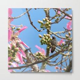 Spring Hummingbird Metal Print