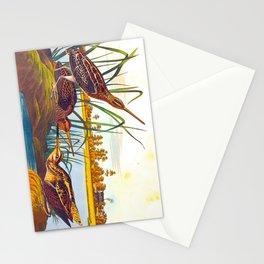 Snipe Duck Vintage Scientific Bird & Botanical Illustration Stationery Cards