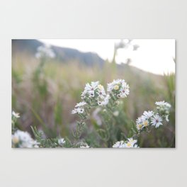 Colorado Wildflower #526 Canvas Print
