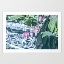 Soft Pink Bleeding Hearts Art Print