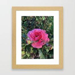 The Spring Hope Framed Art Print