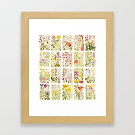 Flowers of Mountain and Plain :: Natural History Collage Framed Art Print
