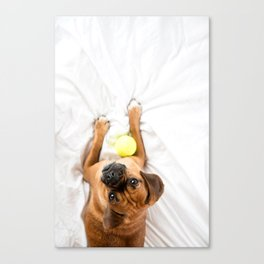 Puggle Dog with Tennis Ball Canvas Print
