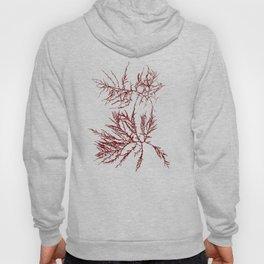 Ocean Plant Pattern Hoody