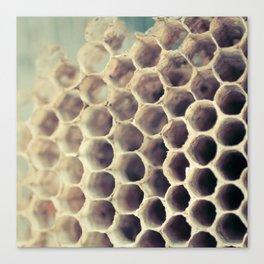 Hive Canvas Print