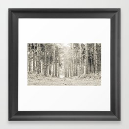 Quiet Forest I Framed Art Print