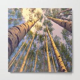 Aspen Trees Against Sky Metal Print