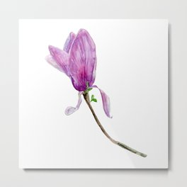 Other magnolia flower Metal Print