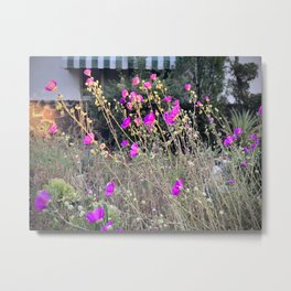 Succulents in Bloom Metal Print