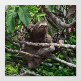 Sloth_20171106_by_JAMFoto Canvas Print