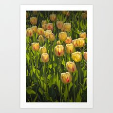 Yellow Tulip Flowers on Windmill Island in Holland Michigan during Tulip Time Festival Art Print