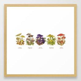 Illustrated Mushrooms Framed Art Print
