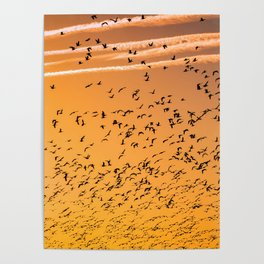 The Birds (Color) Poster