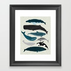 Whales and Porpoises sea life ocean animal nature animals marine biologist Andrea Lauren Framed Art Print