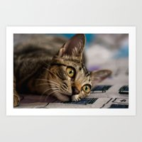 nori Art Prints featuring Nori by Yvo Photography