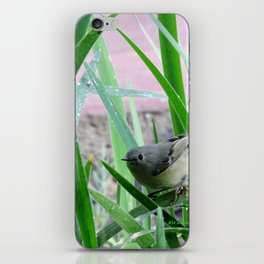 Kinglet Approaching iPhone Skin