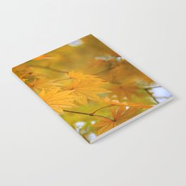 Colorful Japanese Maple In Fall Photography Notebook