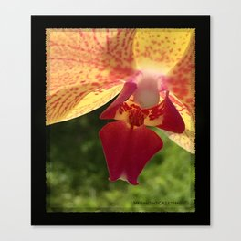 Yellow Orchid Flower Blossom from Mexico Canvas Print