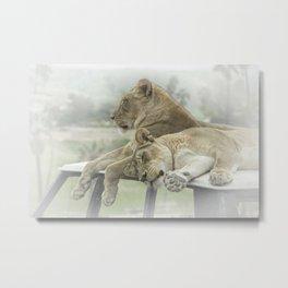 Sleeping Lions Metal Print