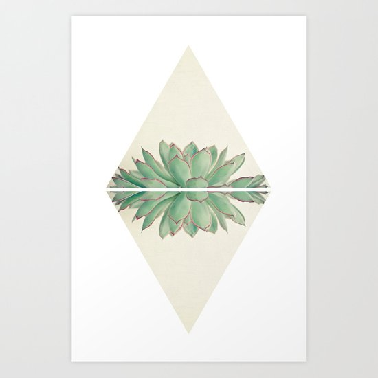 Echeveria II Art Print