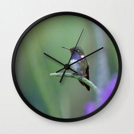 Volcano Hummingbird in Costa Rica Wall Clock