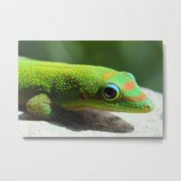 Day Gecko Metal Print