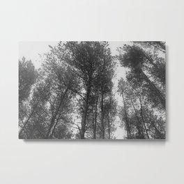 Magic Trees Metal Print
