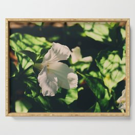 Lily blooming Serving Tray