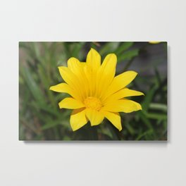 Bright Yellow Gazania Flower Metal Print